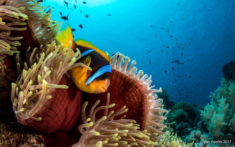 Colourful Red Sea Reefs